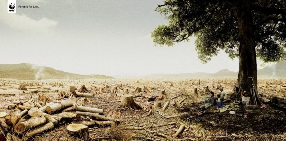 http://i1150.photobucket.com/albums/o617/redsvn/2013/01/Moitruong-WWF-Deforestation/REDSVN-WWF-Deforestation-01.jpg